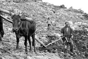 Ploughing III