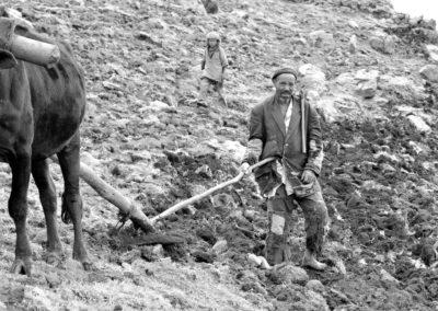 Ploughing-II