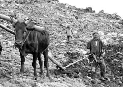 Ploughing-III1